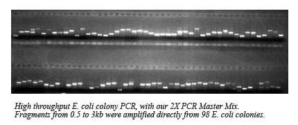 Taq polymerase msds
